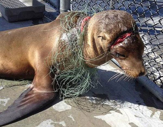 Strangled marine wildlife
